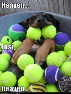 A dog and his tennis balls - a real love story ;-)