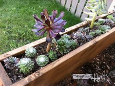 how to make a succulent window box, flowers, gardening, succulents, woodworking projects, Window box was made using waste lumber from another project