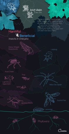 Harmful vs Beneficial Insects in Vineyard  #5March 2016 #Cincin #insect #waken #wine #vineyard #Info #Graphic
