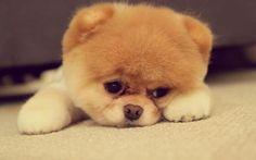 Puppy :)))