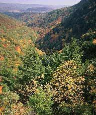 Mt. Washington State Forest.  Massachusetts.  Wilderness Camping,  Fishing, Hiking, Horseback Riding Trails, Hunting (Restrictions),  Mountain Biking, Picnicking,  Restrooms, Scenic Viewing Area,  Skiing (Cross-Country), Walking Trails
