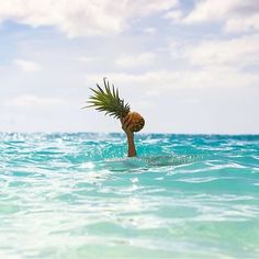 I LOST MY SURFBOARD..BUT HEY I FOUND A PINEAPPLE