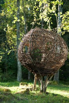 The dormouse nest is made all in hazel – in a living hazelnut tree. Though it sways a lot it is very strong. You could easily sleep two people inside.