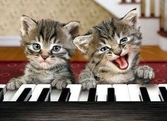 Gatos pianistas