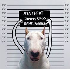 The Instagram photos of Rafael Mantesso, who stages his doggie--a Bull Terrier--in these funny and adorable compositions.