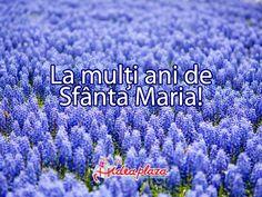 15 August, Happy B Day, Romania, Happy Birthday, Happy Brithday, Happy Brithday, Happy Aniversary, Urari La Multi Ani, Happy Birthday Funny