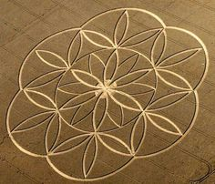 67_flower-of-lifce-crop-circle.jpg (603×517)