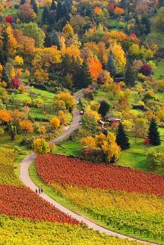Colourful Autumn and Vineyards in Stuttgart Rotenberg, Germany.