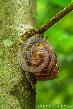 Snail walking along a tree branch