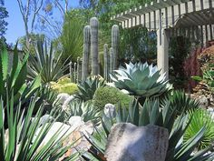 http://www.pacifichorticulture.org/articles/71/4/a-succulent-oasis-at-sherman-library-gardens/