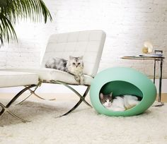 Futuristic Egg-Shaped Pet Beds | DigsDigs