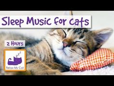 1 hour of Relaxing Music for Cats - Soothe your Cat with Music - YouTube Piano Y Violin, Violin Music, Rain Music, 2 Hours Of Sleep, 4 Hours, Relaxed Dog, Morning Music, Violin Lessons, Cat Drinking