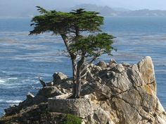 Lone Cypress, Pebble Beach, California.  This can be seen from 17 Mile Drive.  You have to pay a fee to drive into the area, but well worth it.