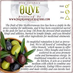 The beautifully-grained hard wood of the Olive tree is a lovely choice for hand-carved serving bowls, utensils, décor, and - you guessed it - wands. The trees are small and grow slowly, contributing to the cost of such items. // #olive #peace #kitchenwitch #sacred #oil #royalty #medicine #calm #harmony #healing Plant Magic, Kitchen Witchery, Olive Tree, Magick, Serving Bowls, Herbalism, Remedies, Herbs, Vegetables