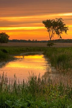 Sunset, Montezuma National Wildlife Refuge, New York
