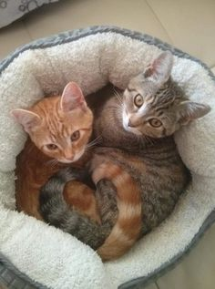 The Love Is Real - World's largest collection of cat memes and other animals Kittens Cutest, Cats And Kittens, Cute Cats, Funny Cats, Cats Humor, Tabby Cats, Animals And Pets, Baby Animals, Funny Animals