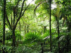 Riserve della foresta pluviale centro orientale  (AUSTRALIA)