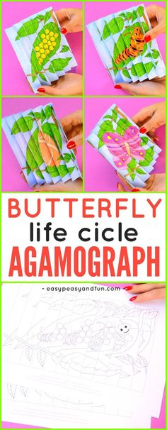 Printable Butterfly Life Cycle Agamograph Template for Kids.
