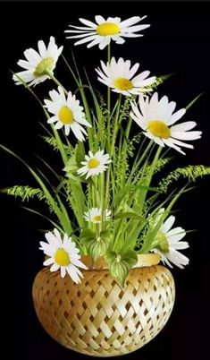Flowers Gif, Beautiful Rose Flowers, Beautiful Flower Arrangements, Flowers Nature, Exotic Flowers, Amazing Flowers, Beautiful Flowers, Flower Vases, Flower Art