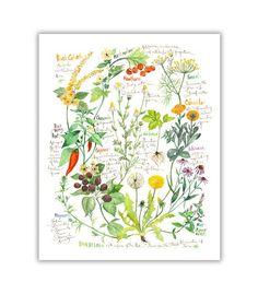 Healing herbs Watercolor print Medicinal herb illustration