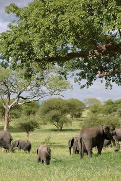 africa elephant landscape safari trees