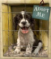 Please adopt me. ! protectallanimals.wordpress.com