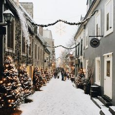 pinterest // shannonleftwich #winter #christmas #winterwonderland #christmastree #snow #cold