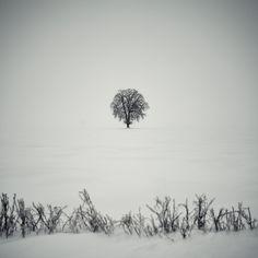 Bogdan Panait Photography