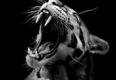 people with animals photography - Google Search