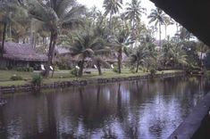 Coco Palms, Kauai. Hurricane Iniki hit the resort in 1992. So sad. It is now abandoned. Was featured location in Blue Hawaii and Fantasy Island.