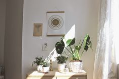 plant collection and sun poster by Jurianne Matter