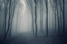grey-mist-forest-mural-wallpaper-plain