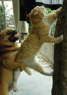 Bahaha, now the question is, is the dog actually helping the cat, or is he trying to pull the cat down