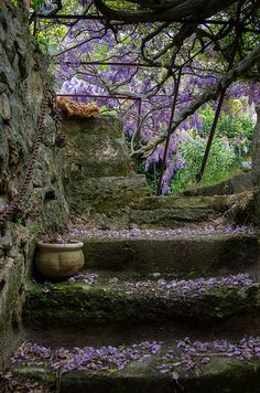 Wisteria in bloom near an ancient stairway in Provence by Bobrad      ᘡղbᘠ