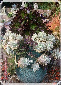 "Elizabeth DuBois Hokama to Aloe & Echeveria & Crassulas & Aeonium  Moorpark, CA, United States ·  My largest arrangement. The pot is three feet tall and weighs >100 lbs. Graptosedum 'Ghosty', Aeonium 'Blackbeard', and Senecio jacobensii (""Trailing Jade"")."
