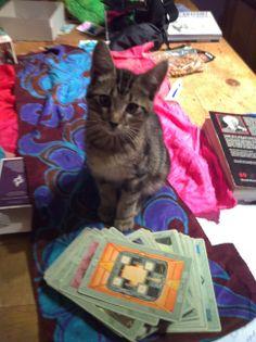 Sam begins his Tarot Apprenticeship as a Kitten
