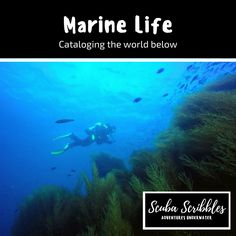 Cataloging the world below by Candice Landau | Scuba Scribbles
