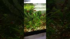 Ataque de pez globo ,ojo con los dedos