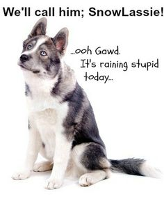 A husky deserves a cool and unique dog name