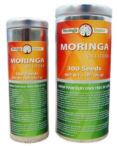 Moringa Oleifera Seeds - grow your own antioxidants! #vegan