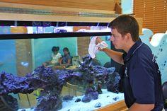 aquarium cleaning - Google Search
