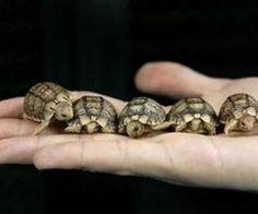 turtle. turtle. turtle.