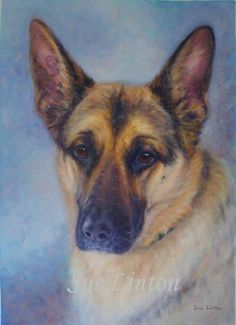 Pet portrait painting of an Alsatian dog ...BTW,Please Check this out: http://artcaffeine.imobileappsys.com