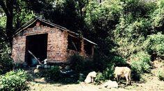 Nurpur himachal pardesh india