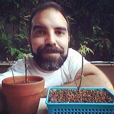 Una semana después de #hacerloquehayquehacer mi #bonsai zero arce y sus esquejes tb están brotando @escueladebonsaionline #anaymiguelweb