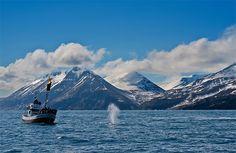 Whale watching in Husavik, Iceland.
