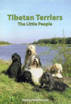 "Tibetan Terriers  ""The Little People"" - Hanne Mathiasen"