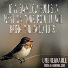 """""""If a swallow builds a nest on your roof, it will bring you good luck."""" - #UNBREAKABLE by Kami Garcia #thelegionseries #kamigarcia #YAbooks #supernatural #paranormal #quotes *"""