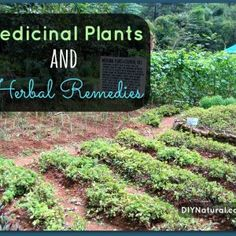 Medicinal Plants and Herbal Remedies