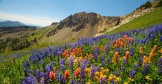 Snowbird Ski & Summer Resort Wasatch Wildflower Festival Free naturalist-guided wildflower walks, and hikes for all levels, with activities built in, chairlift rides, music, kids' art, and More! July 26, 2015 (annual event)